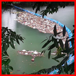 Bio-Bars Pilot Project yield results on Mopan River