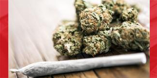 Marijuana's effects on the mammalian brain