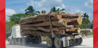 Illegal logging in River Valley Area