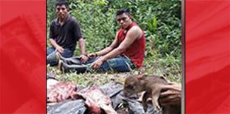 Guatemalan poachers detained